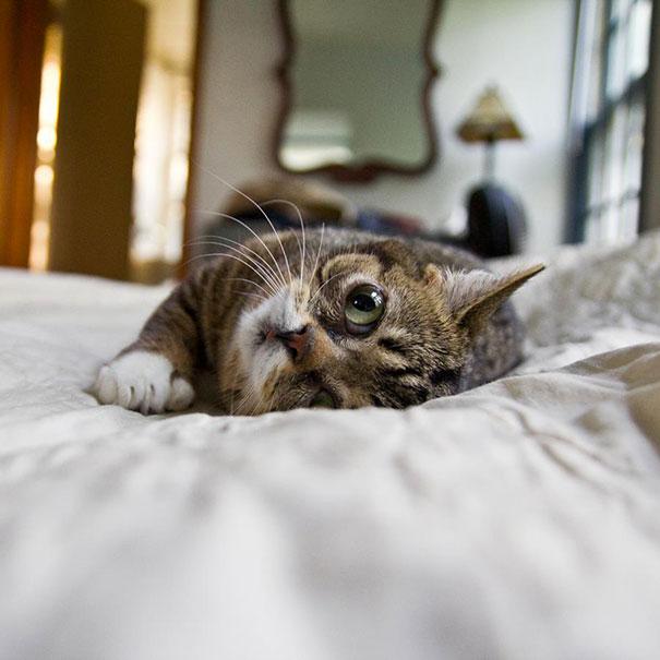 World S Cutest Dwarf Kitten Becomes Internet Sensation