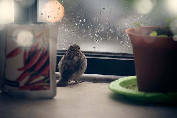 I Found A Blind Baby Sparrow Below My Balcony After A Storm