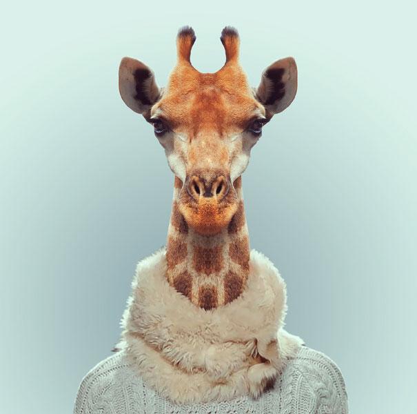 funny-zoo-animal-portraits-yago-partal-10