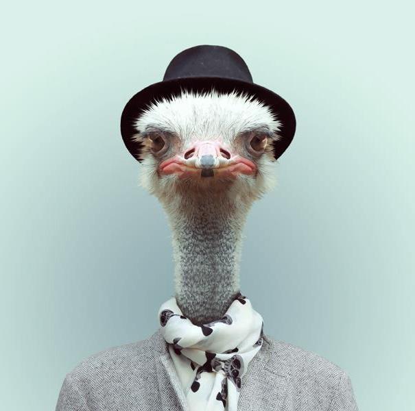 funny-zoo-animal-portraits-yago-partal-6