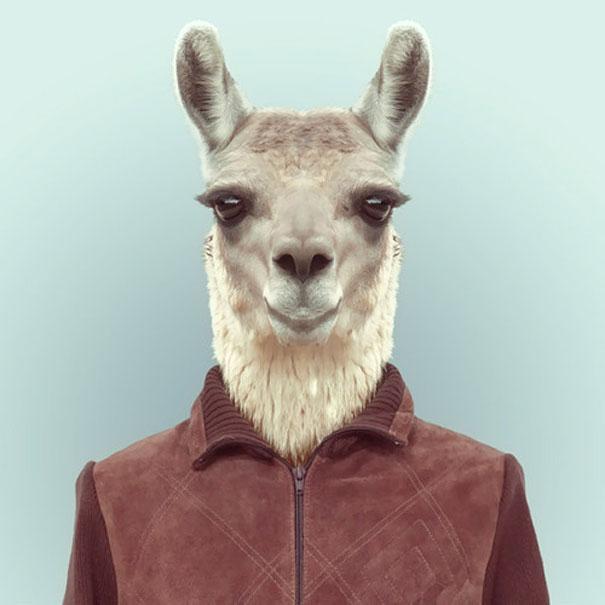 funny-zoo-animal-portraits-yago-partal-9