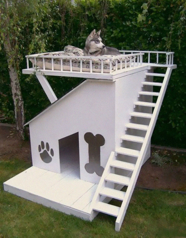 Dog House/Fort