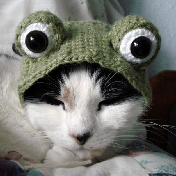 19. Frog Cat & 21 Creative and Funny Halloween Costumes For Pets | Bored Panda