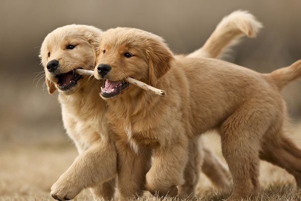 happy animal facts smile puppies animals puppy them let physical dogs interesting happiest amazing breathe si ever meme adorable put