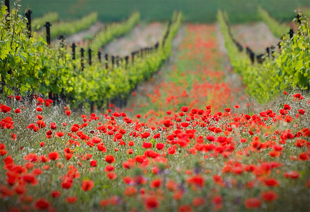 landscape photography flowers. photo by ales komovec landscape photography flowers g