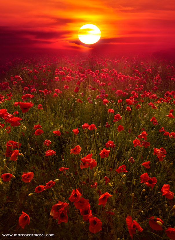 landscape photography flowers. 3 deep red landscape photography flowers r