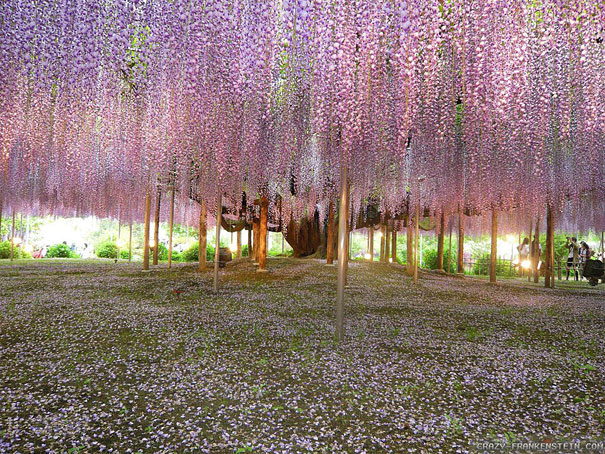 landscape photography flowers. japan flower park landscape photography flowers p