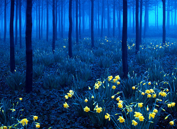 Countryside Spring Field Landscape With Yellow Flowers - Rape ...