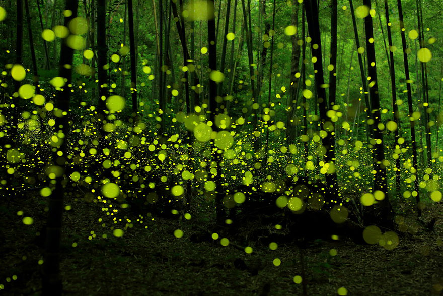 Dream-Like Long Exposure Photos of Fireflies in Nagoya, Japan