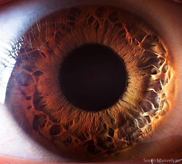 Extreme Close-Ups of the Human Eye