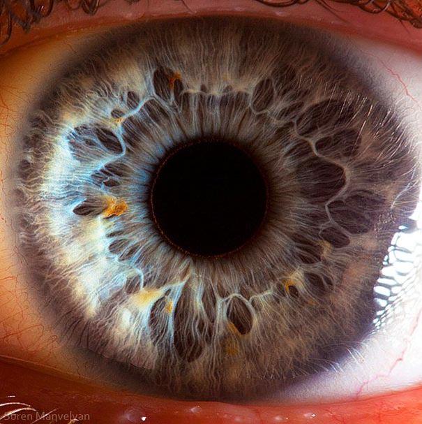 extreme close-ups of the human eye | bored panda