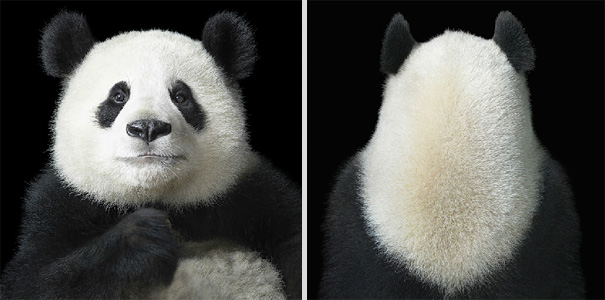 More than Human: Animal Portraits by Tim Flach