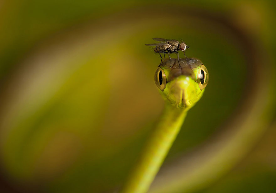 22 Best Wildlife Photos From National Geographic Traveler Photo Contest