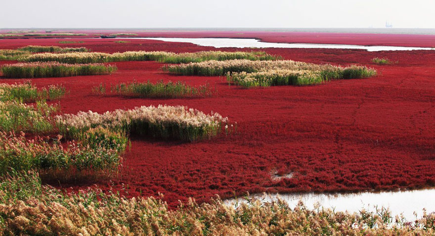 panjin-red-beach-china-2