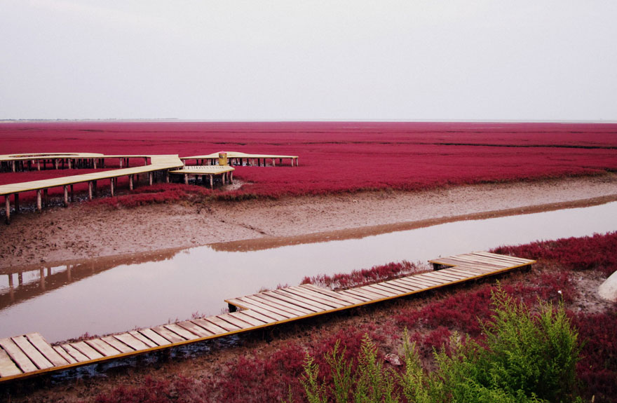 panjin-red-beach-china-3