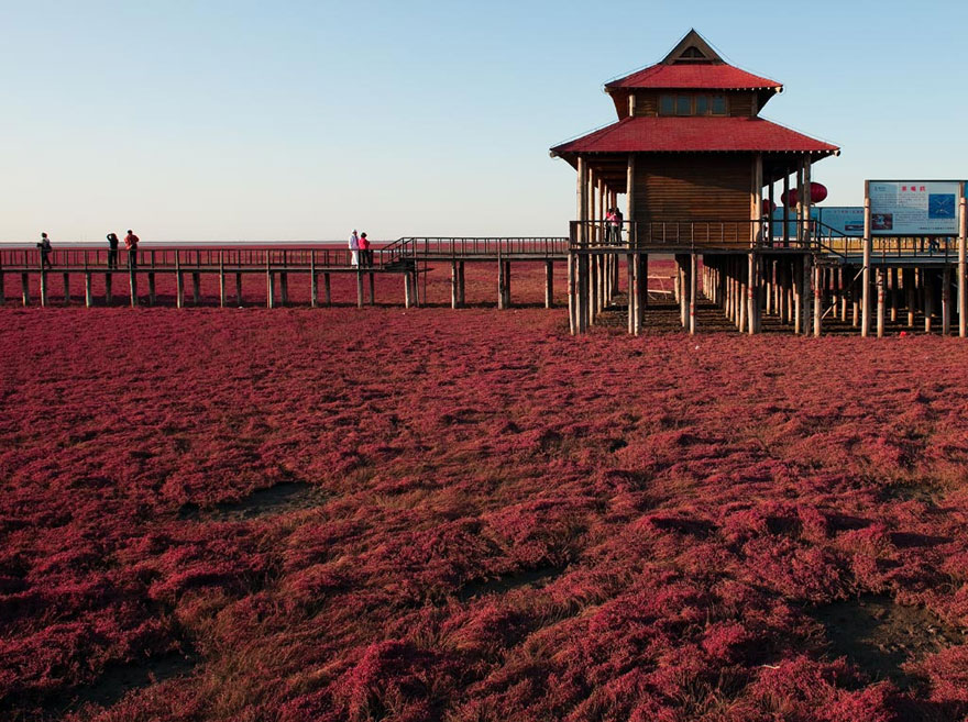 panjin-red-beach-china-5
