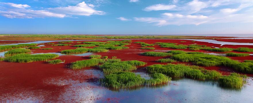 panjin-red-beach-china-8