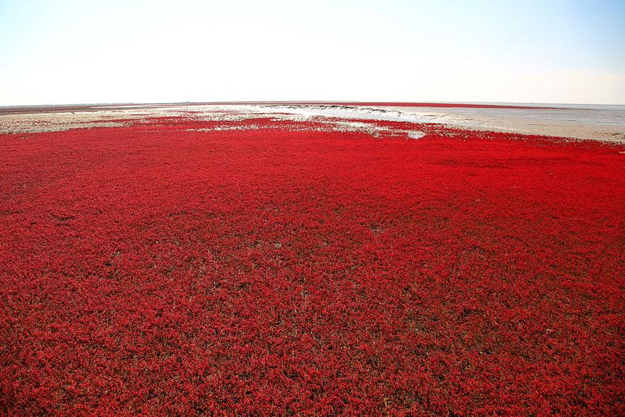 panjin-red-beach-china-9