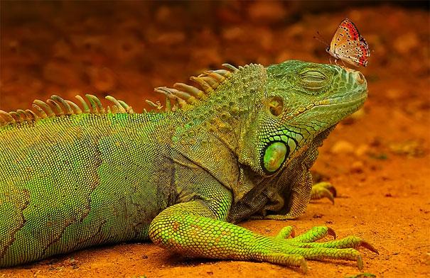 50 прекрасных фотографий животных