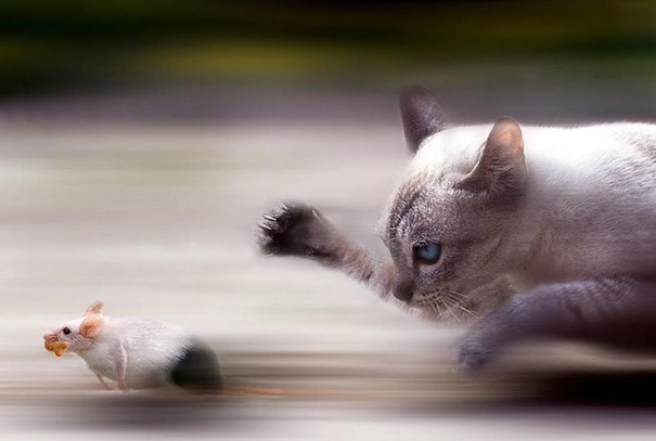 50 Perfectly Timed Animal Photos