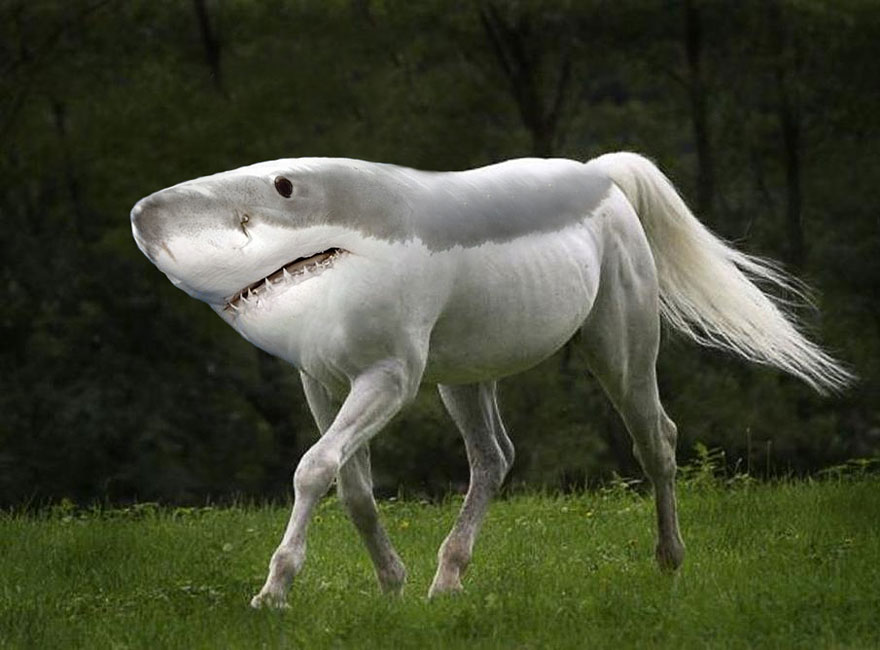 15 New Animal Species Bred in Photoshop | Bored Panda