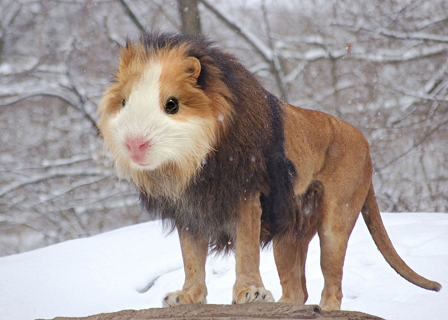 15 New Animal Species Bred In Photoshop Bored Panda
