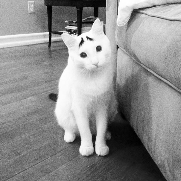 sam-cat-with-eyebrows-5