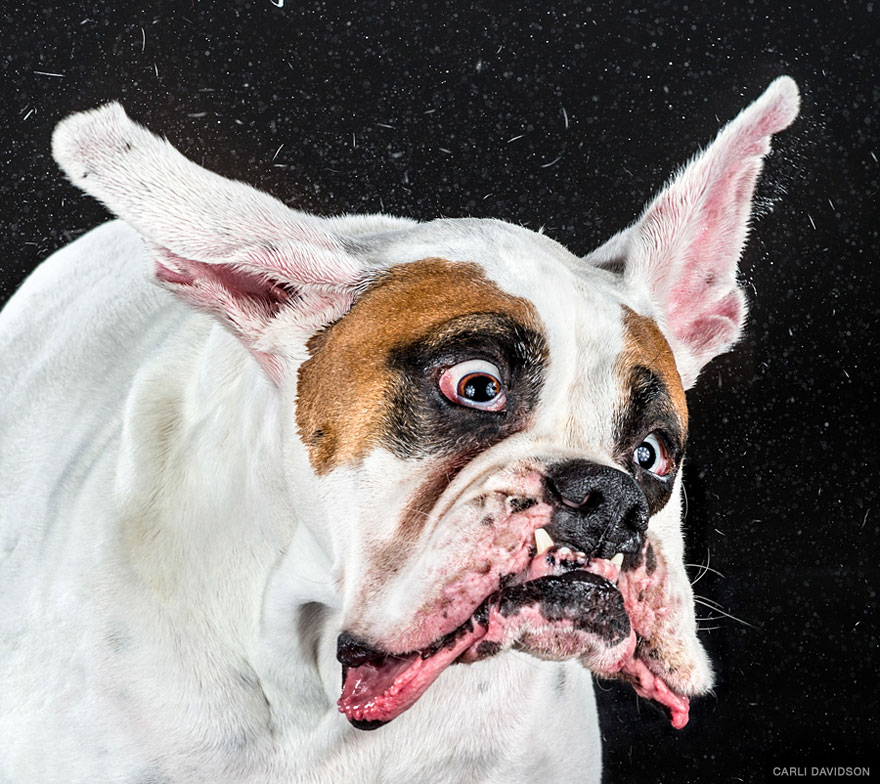 Shake: Slow Motion Photos Of Dogs Shaking Their Heads ...
