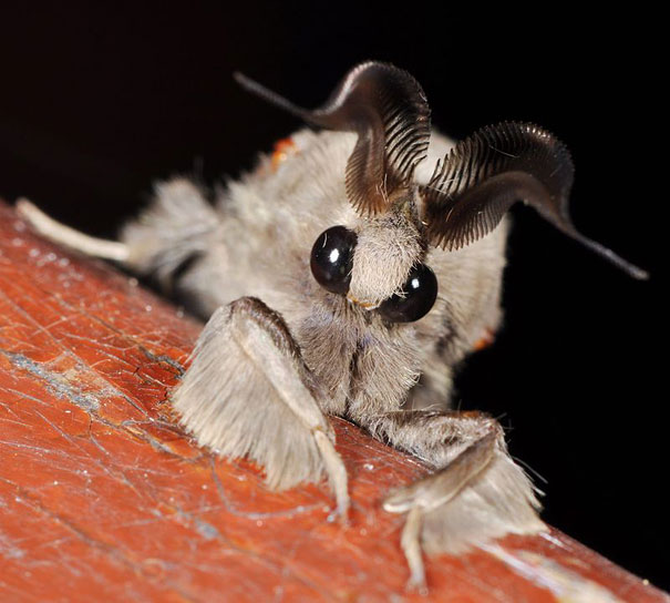 More Strange Animals You Didnt Know Exist Bored Panda - 18 terrifying strange animals didnt even know existed