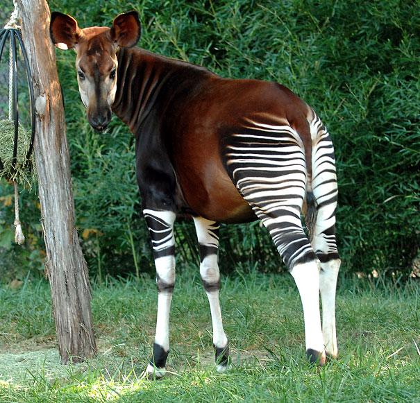 невідомі види тварин фото