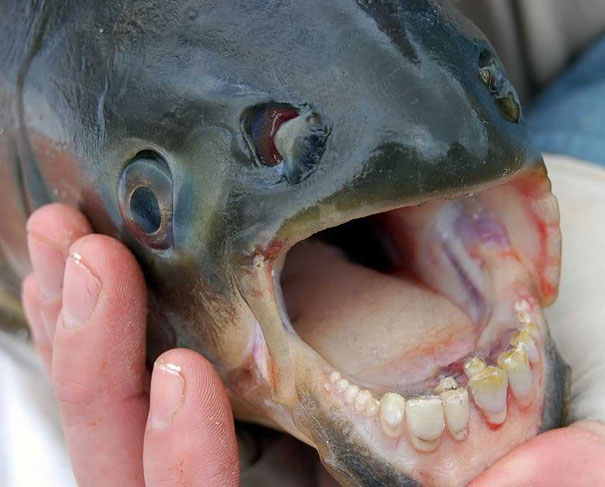 21 More Weird Animals You Didn't Know Exist
