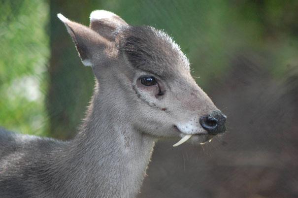 фото 50 видів тварин