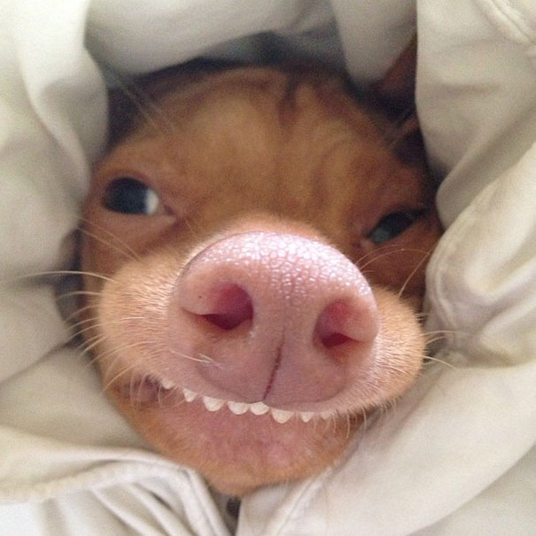 Tuna The Abandonded Puppy Becomes Adorable Internet ... - photo#28
