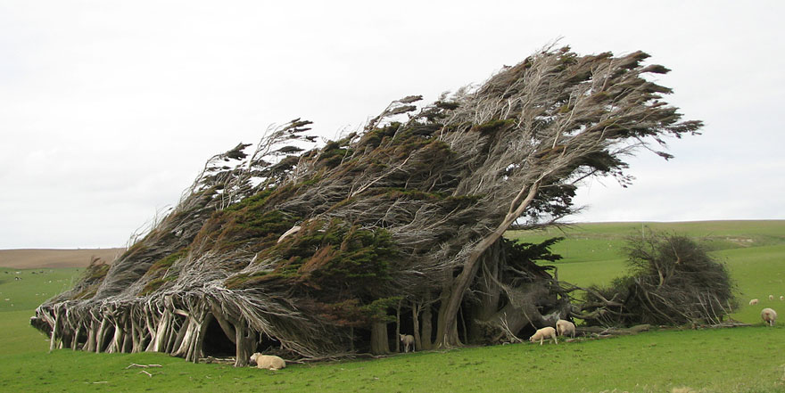 Extreme Antarctic Winds Shape Trees Into Beautiful Forms on Slope