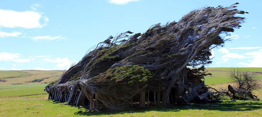 Extreme antarctic winds shape trees into beautiful forms for Arboles de jardin que den sombra