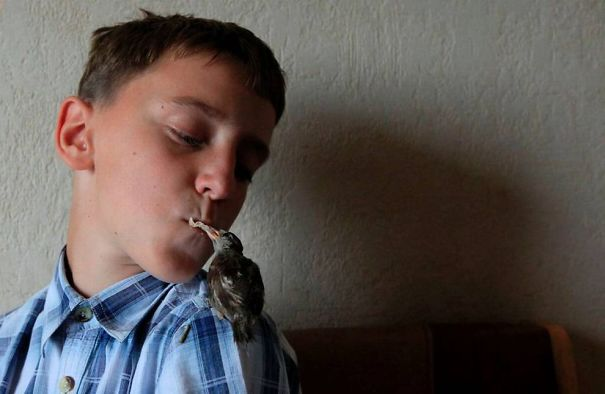 An Unusual Friendship Between A Sparrow And A 12 Year Old Boy