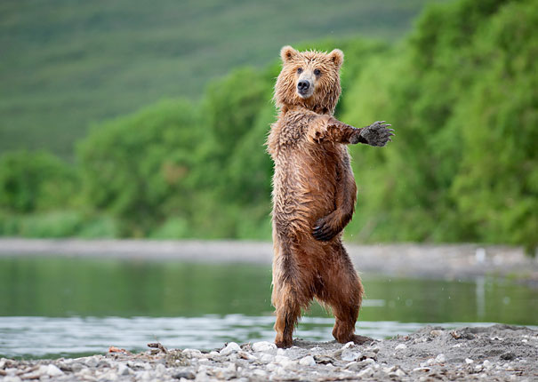 Adorable Photos of Bear Cubs in Russia's Wild East