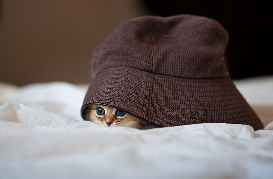 worlds-cutest-kitten-daisy-6.jpg